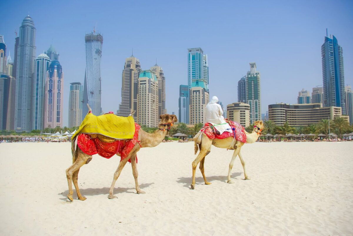 Βόλτα με καμήλες στο Ντουμπάι