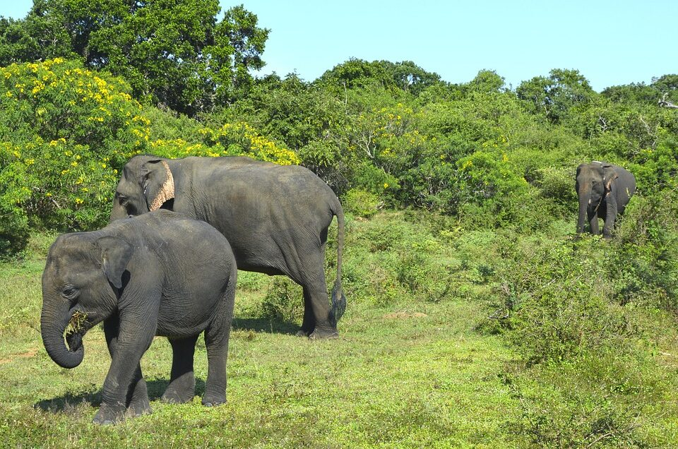 Σρι Λάνκα ελέφαντες loveyourholidays
