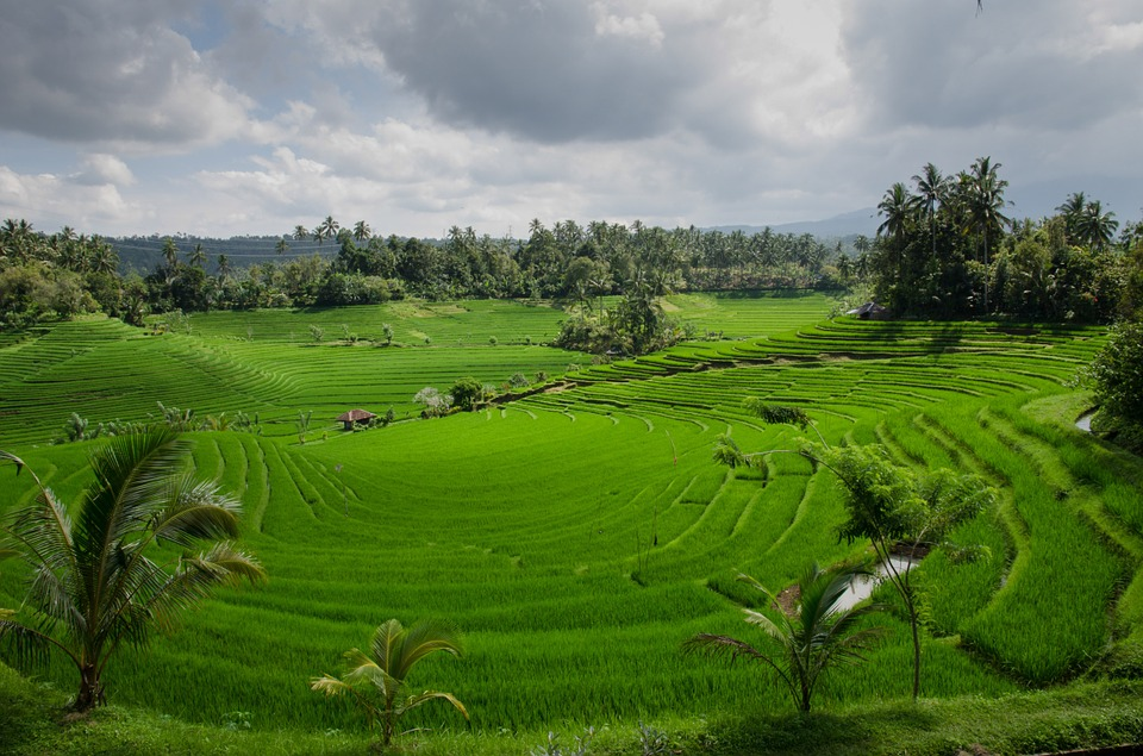 rice-terraces ορυζώνες Ασία