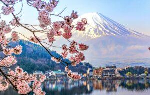 cherry blossom japan loveyourholidays ανθισμένες κερασιές